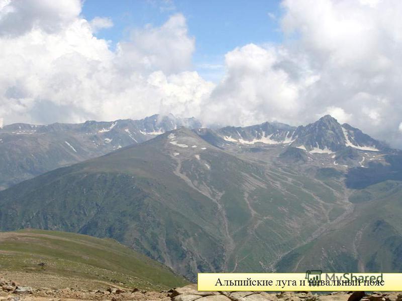 Альпийские луга и нивальный пояс