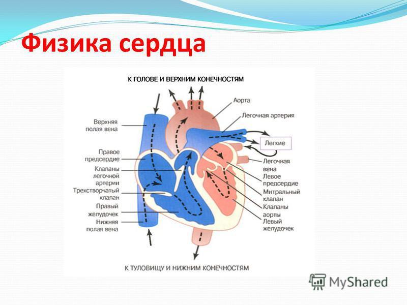 Физика сердца