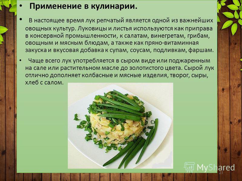 23 Применение в кулинарии. В настоящее время лук репчатый является одной из важнейших овощных культур. Луковицы и листья используются как приправа в консервной промышленности, к салатам, винегретам, грибам, овощным и мясным блюдам, а также как пряно-
