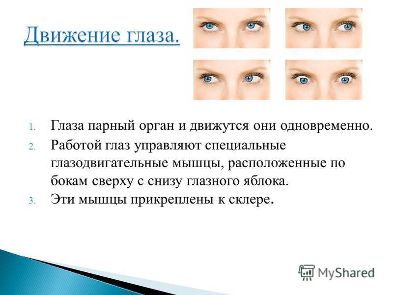1. Глаза парный орган и движутся они одновременно. 2. Работой глаз управляют специальные глазодвигательные мышцы, расположенные по бокам сверху с снизу глазного яблока. 3. Эти мышцы прикреплены к склере.