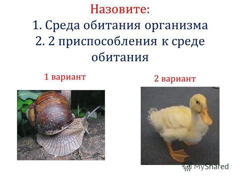 Назовите: 1. Среда обитания организма 2. 2 приспособления к среде обитания 1 вариант 2 вариант