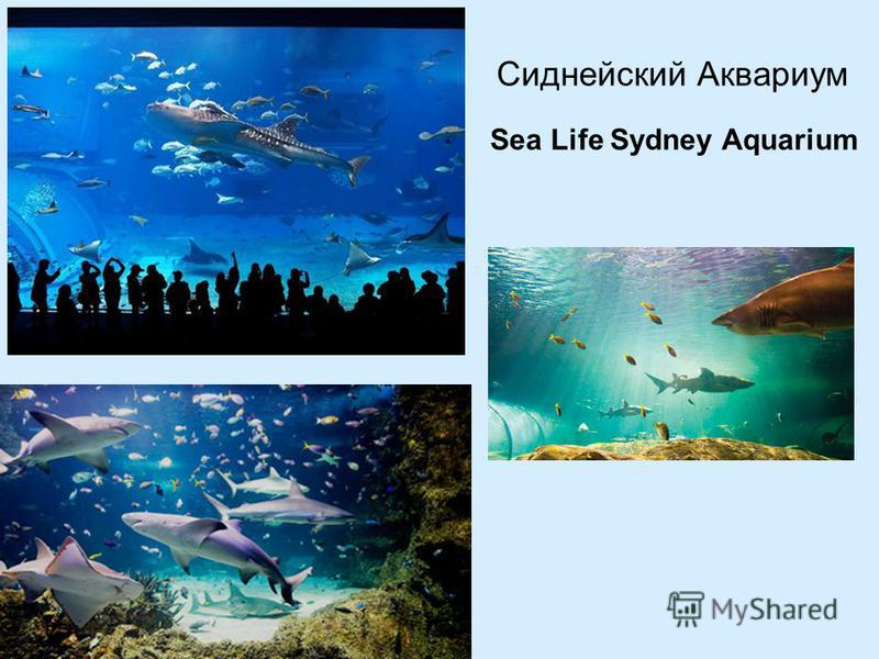 Сиднейский Аквариум Sea Life Sydney Aquarium