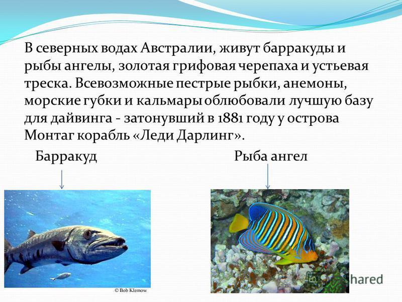 В северных водах Австралии, живут барракуды и рыбы ангелы, золотая грифовая черепаха и устьевая треска. Всевозможные пестрые рыбки, анемоны, морские губки и кальмары облюбовали лучшую базу для дайвинга - затонувший в 1881 году у острова Монтаг корабл