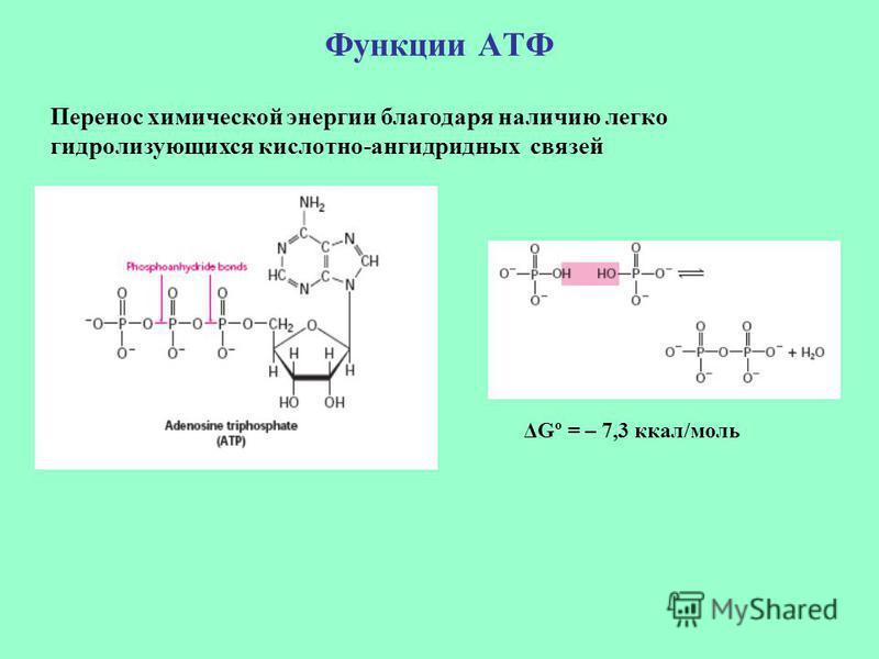 Функции АТФ Перенос химической энергии благодаря наличию легко гидролизующихся кислотно-ангидридных связей ΔGº = – 7,3 ккал/моль