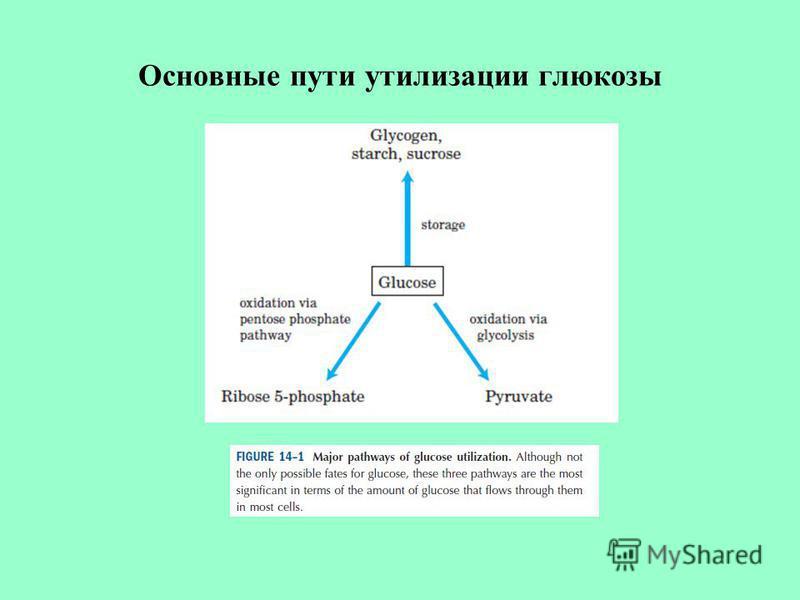 Основные пути утилизации глюкозы