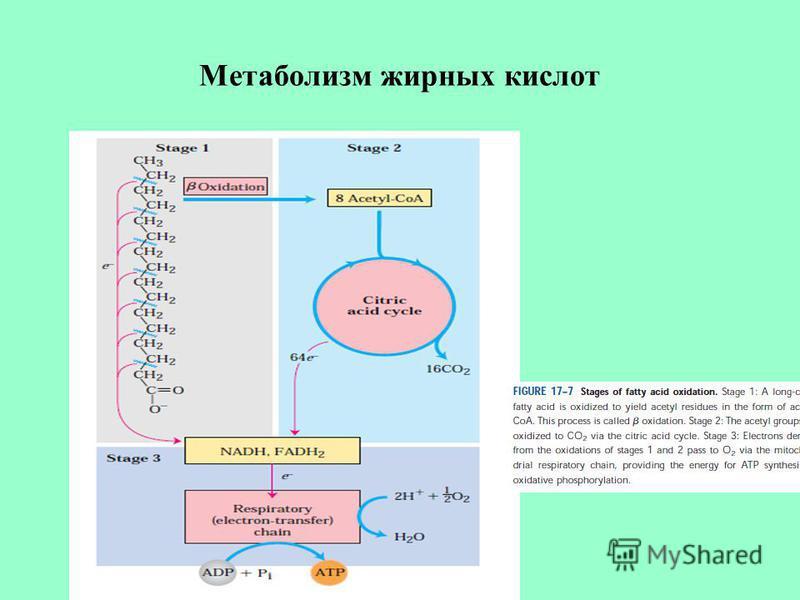 Метаболизм жирных кислот