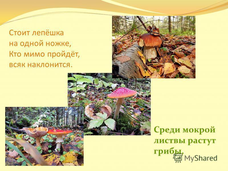 Стоит лепёшка на одной ножке, Кто мимо пройдёт, всяк наклонится. Среди мокрой листвы растут грибы.
