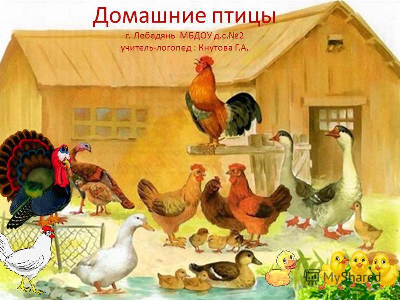 Домашние птицы г. Лебедянь МБДОУ д.с.2 учитель-логопед : Кнутова Г.А.