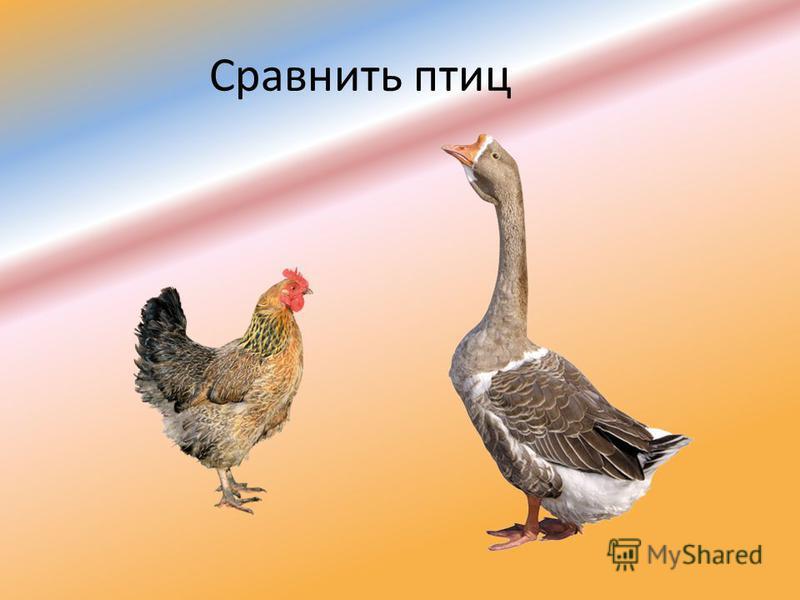 Сравнить птиц