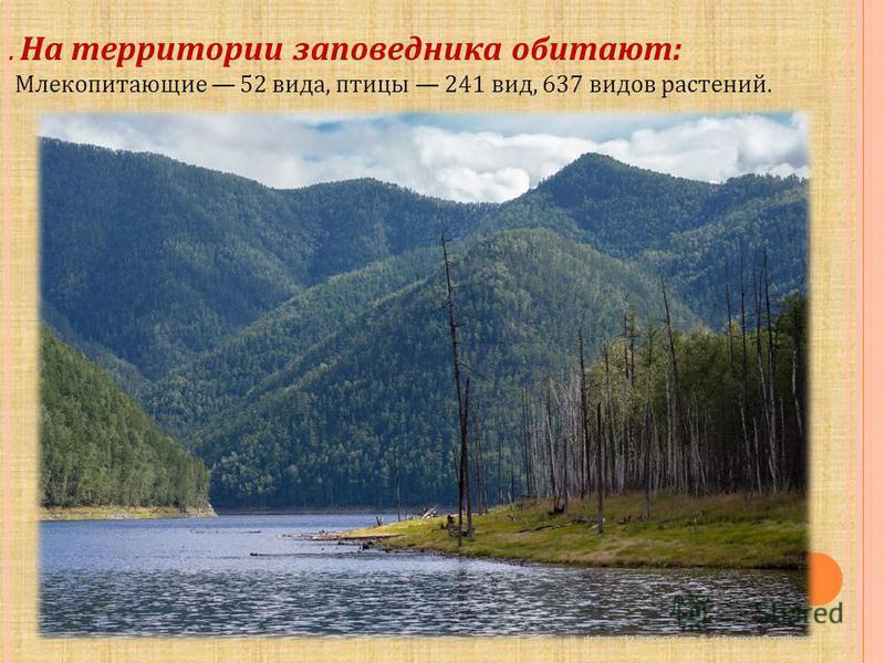 . На территории заповедника обитают: Млекопитающие 52 вида, птицы 241 вид, 637 видов растений.
