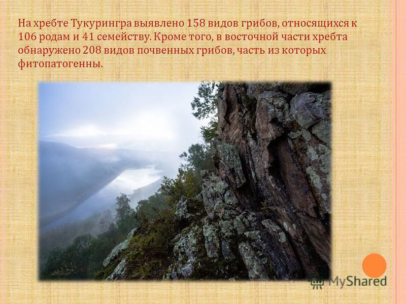 На хребте Тукурингра выявлено 158 видов грибов, относящихся к 106 родам и 41 семейству. Кроме того, в восточной части хребта обнаружено 208 видов почвенных грибов, часть из которых фитопатогенные.