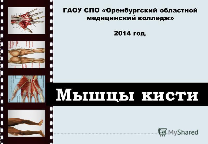 Мышцы кисти ГАОУ СПО «Оренбургский областной медицинский колледж» 2014 год.
