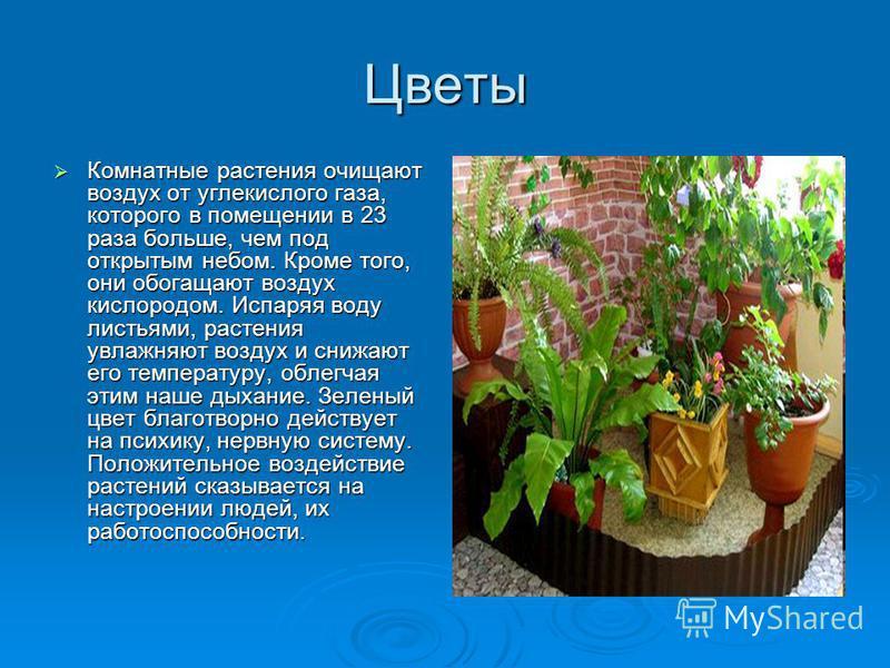 Цветы Комнатные растения очищают воздух от углекислого газа, которого в помещении в 23 раза больше, чем под открытым небом. Кроме того, они обогащают воздух кислородом. Испаряя воду листьями, растения увлажняют воздух и снижают его температуру, облег