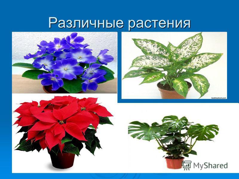 Различные растения