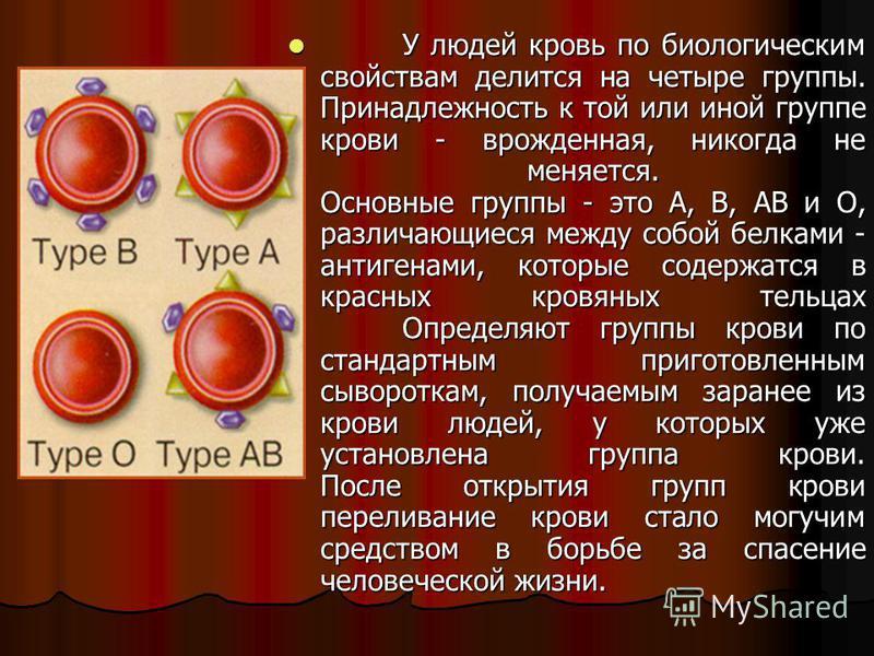 У людей кровь по биологическим свойствам делится на четыре группы. Принадлежность к той или иной группе крови - врожденная, никогда не меняется. Основные группы - это А, В, АВ и О, различающиеся между собой белками - антигенами, которые содержатся в