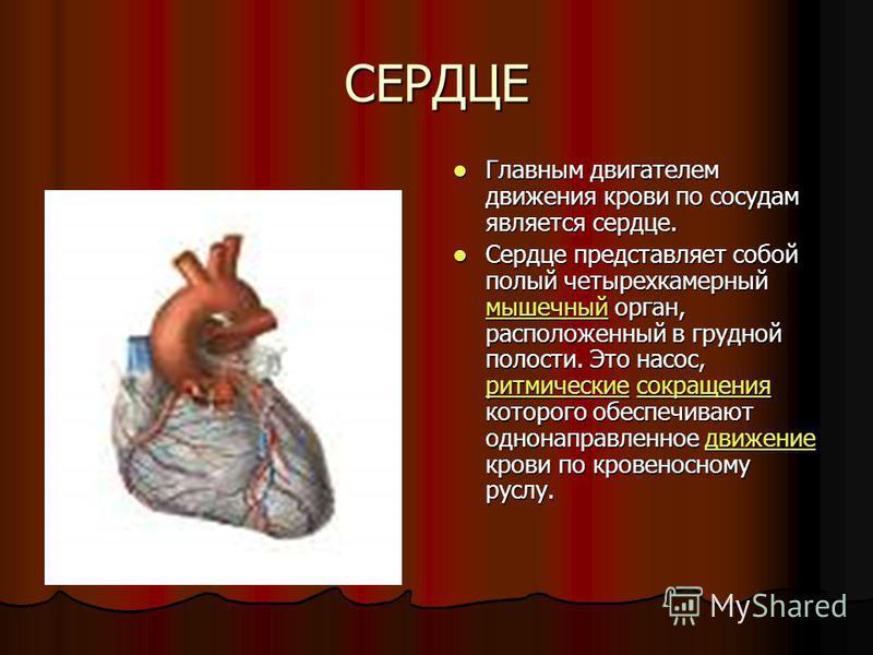 СЕРДЦЕ Главным двигателем движения крови по сосудам является сердце. Главным двигателем движения крови по сосудам является сердце. Сердце представляет собой полый четырехкамерный мышечный орган, расположенный в грудной полости. Это насос, ритмические