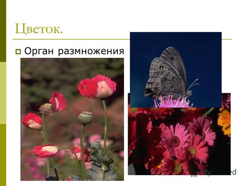Цветок. Орган размножения