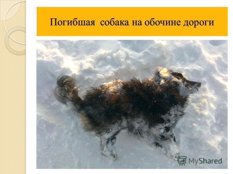 Погибшая собака на обочине дороги