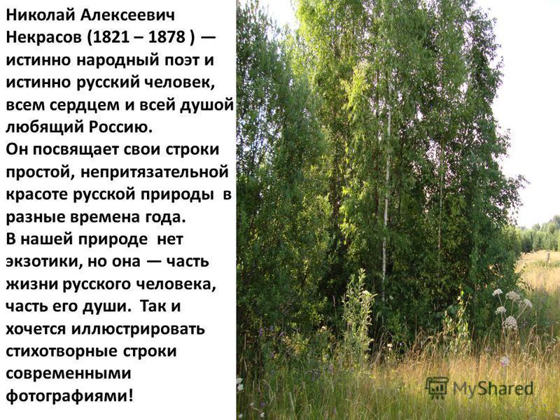 Николай Алексеевич Некрасов (1821 – 1878 ) истинно народный поэт и истинно русский человек, всем сердцем и всей душой любящий Россию. Он посвящает свои строки простой, непритязательной красоте русской природы в разные времена года. В нашей природе не