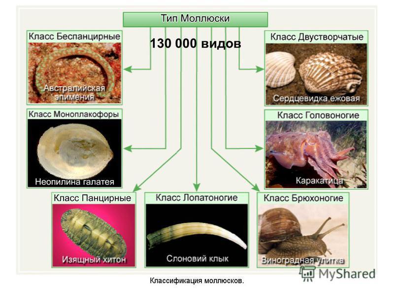130 000 видов