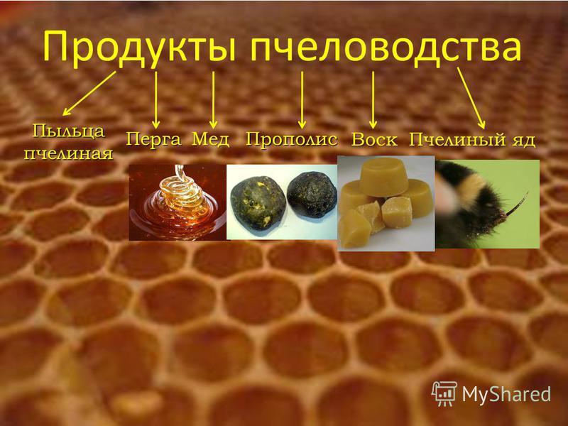 Продукты пчеловодства Пыльца пчелиная Перга ПрополисВоск Пчелиный яд Мед