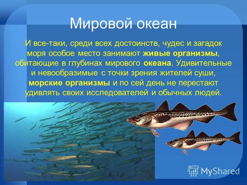 Мировой океан И все-таки, среди всех достоинств, чудес и загадок моря особое место занимают живые организмы, обитающие в глубинах мирового океана. Удивительные и невообразимые с точки зрения жителей суши, морские организмы и по сей день не перестают