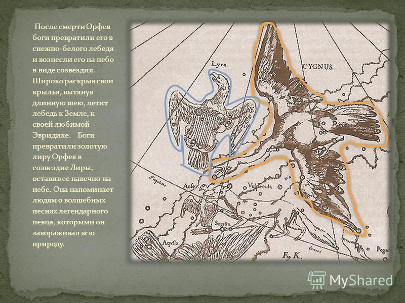 После смерти Орфея боги превратили его в снежно-белого лебедя и вознесли его на небо в виде созвездия. Широко раскрыв свои крылья, вытянув длинную шею, летит лебедь к Земле, к своей любимой Эвридике. Боги превратили золотую лиру Орфея в созвездие Лир
