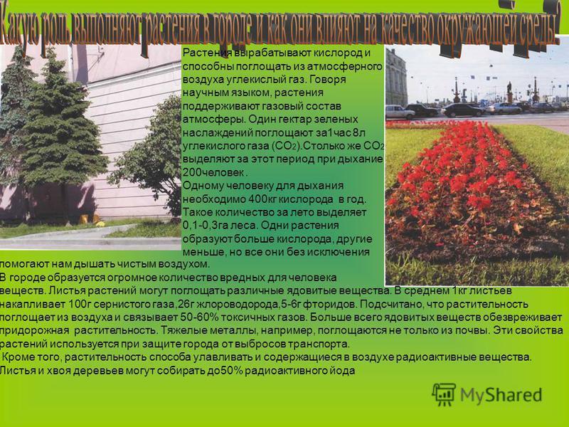 Растения вырабатывают кислород и способны поглощать из атмосферного воздуха углекислый газ. Говоря научным языком, растения поддерживают газовый состав атмосферы. Один гектар зеленых наслаждений поглощают за 1 час 8 л углекислого газа (СО 2 ).Столько