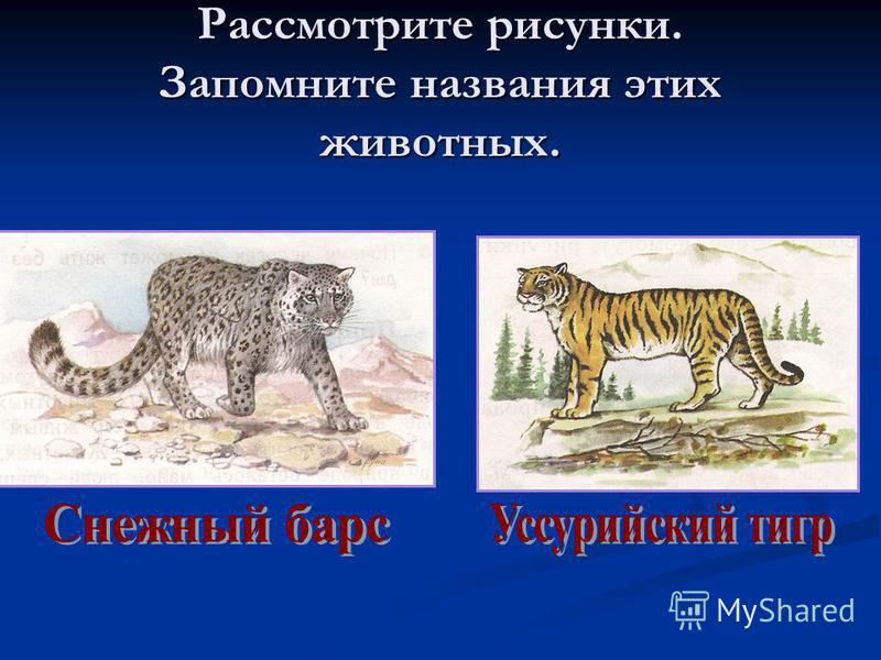 Рассмотрите рисунки. Запомните названия этих животных.