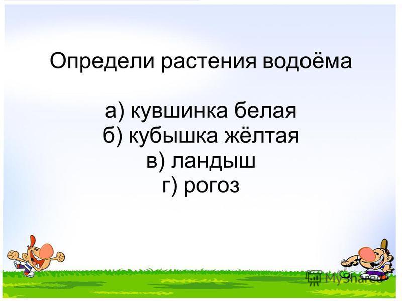 Определи растения водоёма а) кувшинка белая б) кубышка жёлтая в) ландыш г) рогоз