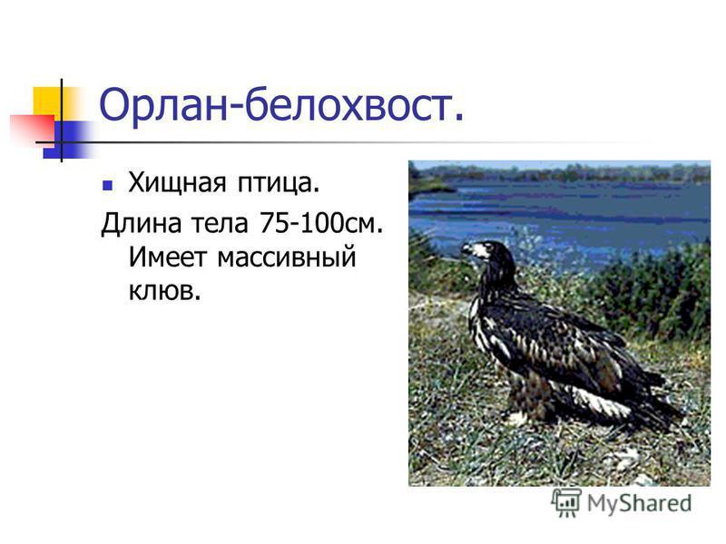 Сова. С 1964 года находится под охраной государства. Одна сова уничтожает за лето 1000 мышей, которые способны уничтожить 1 тонну зерна.