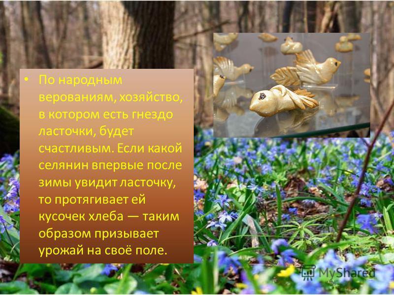 По народным верованиям, хозяйство, в котором есть гнездо ласточки, будет счастливым. Если какой селянин впервые после зимы увидит ласточку, то протягивает ей кусочек хлеба таким образом призывает урожай на своё поле.