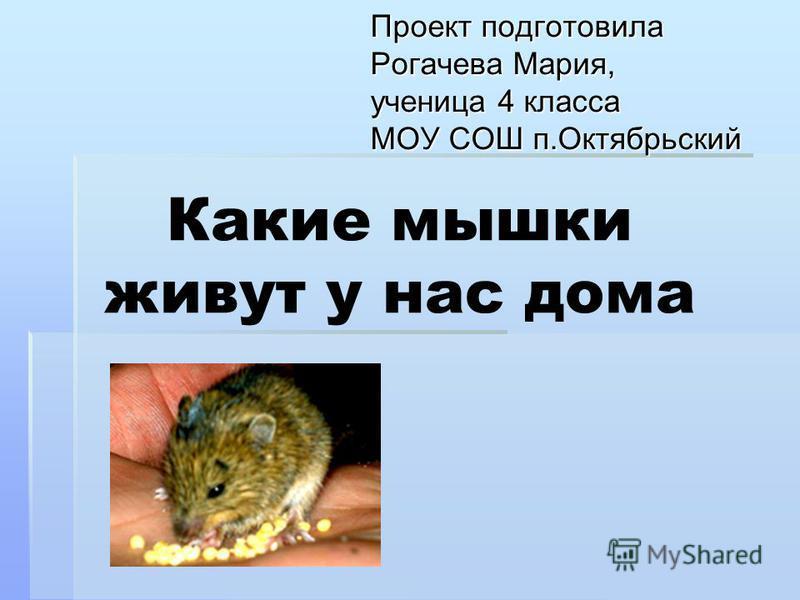 Какие мышки живут у нас дома Проект подготовила Рогачева Мария, ученица 4 класса МОУ СОШ п.Октябрьский
