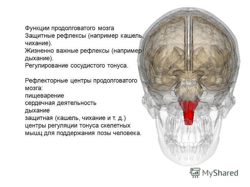 Функции продолговатого мозга Защитные рефлексы (например кашель, чихание). Жизненно важные рефлексы (например дыхание). Регулирование сосудистого тонуса. Рефлекторные центры продолговатого мозга: пищеварение сердечная деятельность дыхание защитная (к