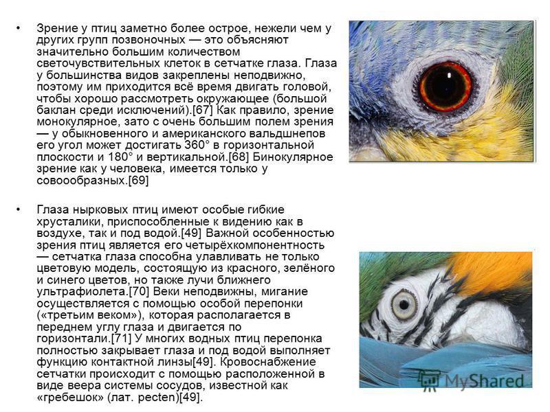 Зрение у птиц заметно более острое, нежели чем у других групп позвоночных это объясняют значительно большим количеством светочувствительных клеток в сетчатке глаза. Глаза у большинства видов закреплены неподвижно, поэтому им приходится всё время двиг
