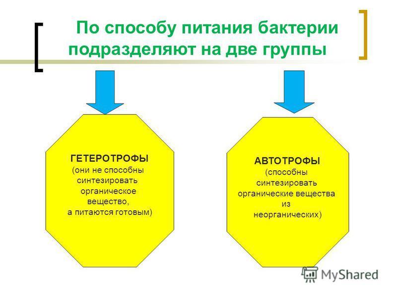 По способу питания бактеречи подразделяют на две группы ГЕТЕРОТРОФЫ (они не способны синтезировать органическое вещество, а питаются готовым) АВТОТРОФЫ (способны синтезировать органические вещества из неорганических)