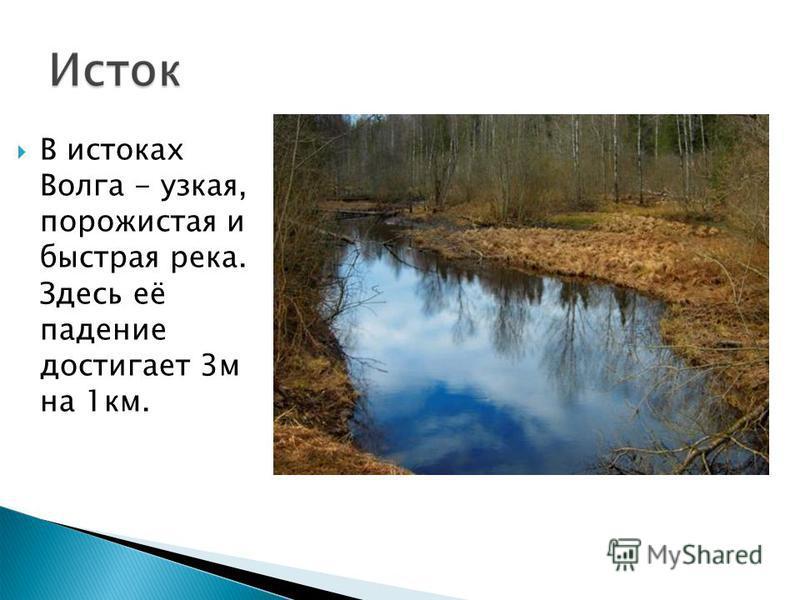 В истоках Волга - узкая, порожистая и быстрая река. Здесь её падение достигает 3 м на 1 км.