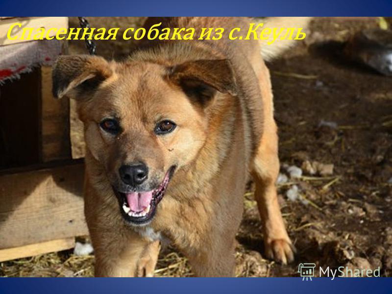 Спасенная собака из с.Кеуль