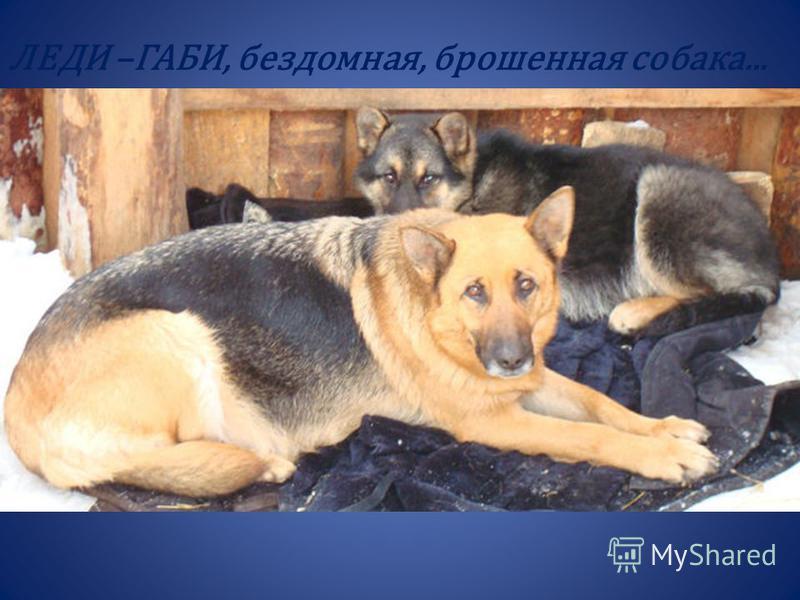 ЛЕДИ –ГАБИ, бездомная, брошенная собака...