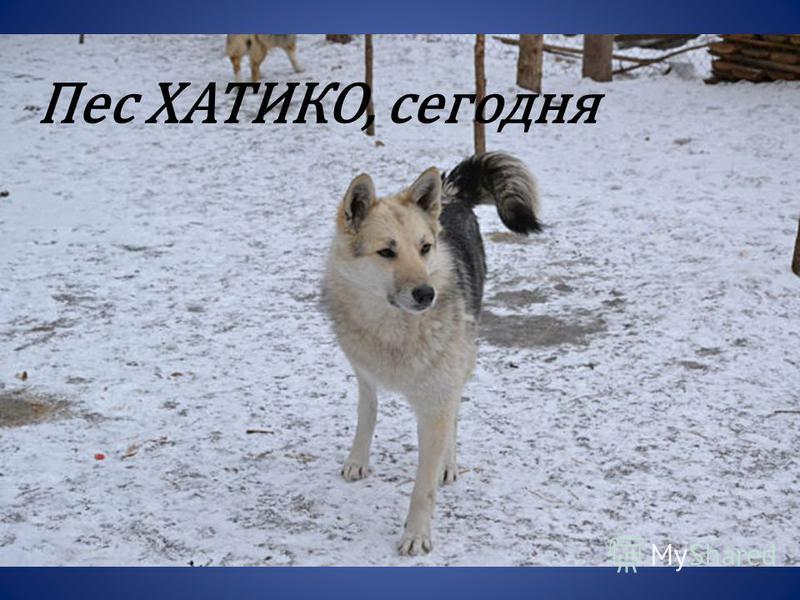 Пес ХАТИКО, сегодня