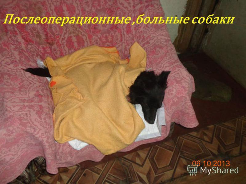 Послеоперационные,больные собаки