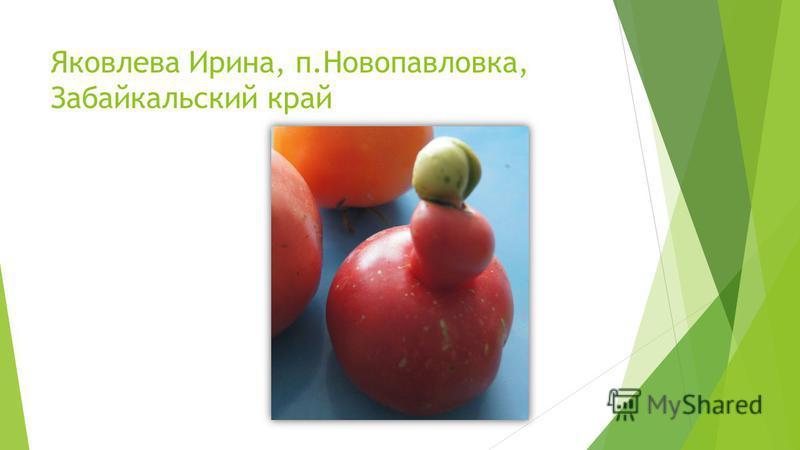 Яковлева Ирина, п.Новопавловка, Забайкальский край
