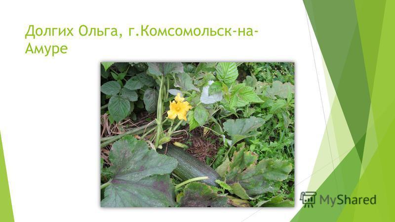 Долгих Ольга, г.Комсомольск-на- Амуре