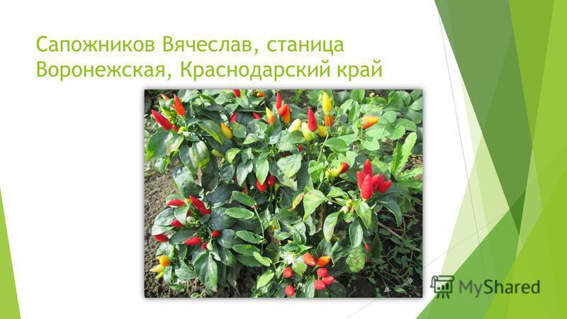 Сапожников Вячеслав, станица Воронежская, Краснодарский край