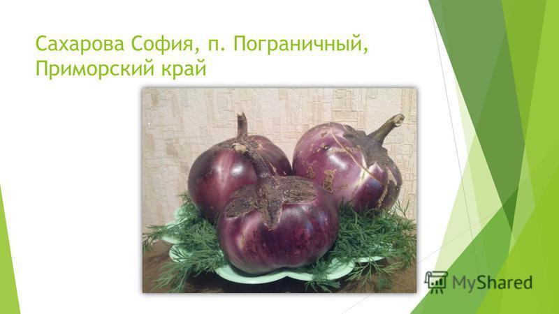 Сахарова София, п. Пограничный, Приморский край
