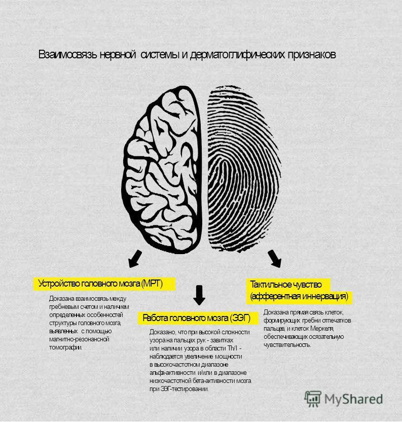 Устройство головного мозга (МРТ) Работа головного мозга (ЭЭГ) Тактильное чувство (афферентная иннервация) Доказана взаимосвязь между гребневым счетом и наличием определенных особенностей структуры головного мозга, выявленных с помощью магнитно-резона