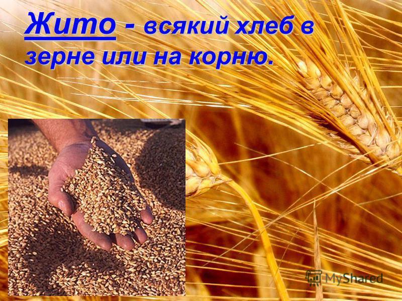 Жито - всякий хлеб в зерне или на корню.