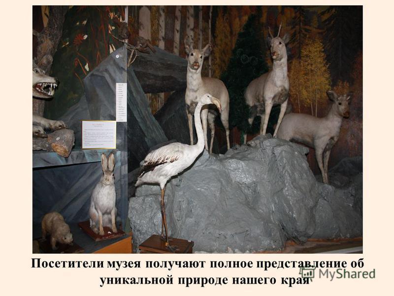 Посетители музея получают полное представление об уникальной природе нашего края