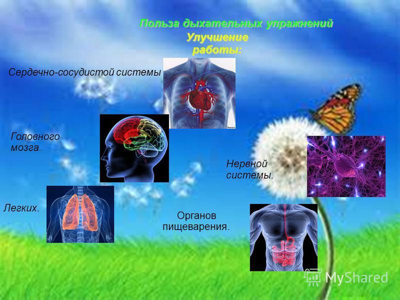 Польза дыхательных упражнений Сердечно-сосудистой системы Головного мозга. Легких. Нервной системы. Органов пищеварения. Улучшение работы: