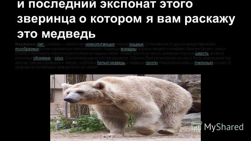 и последний экспонат этого зверинца о котором я вам расскажу это медведь Медве́жди (лат. Ursidae) семейство млекопитающих отряда хищных. Отличаются от других представителей псообразныхболее коренастым телосложением. Медведи всеядны, хорошо лазают и п